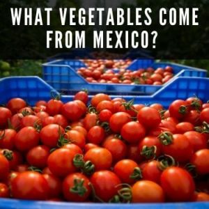 what vegetables come from mexico