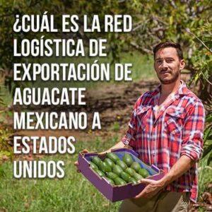 Cuál es la red logística de exportación de aguacate mexicano a estados unidos