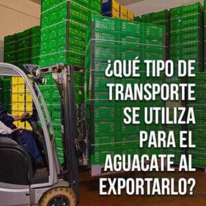 Qué tipo de transporte se utiliza para el aguacate al exportarlo